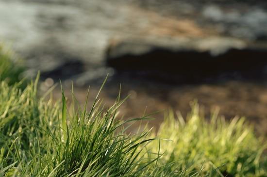 绿色护眼小草唯美图片
