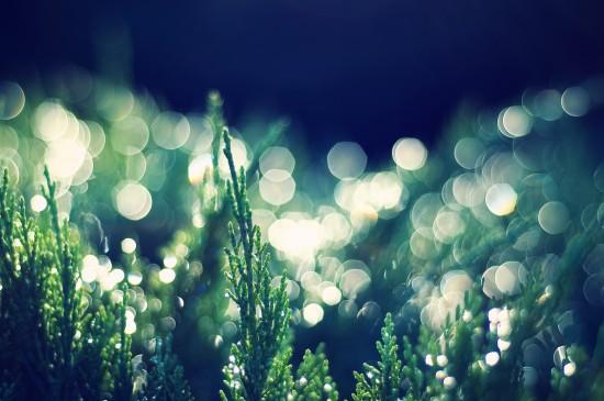 綠色護眼植物圖片