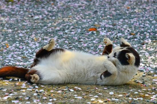可愛的小貓咪圖片