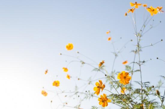 清新自然黃色花朵自然美