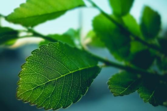 清新綠色護眼樹葉圖片
