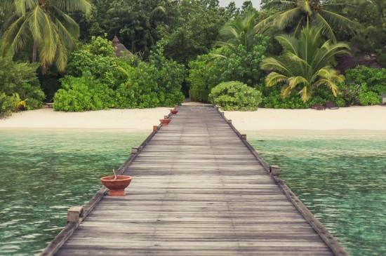 唯美红色果实图片