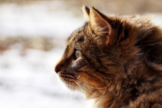 深思中的橘貓圖片