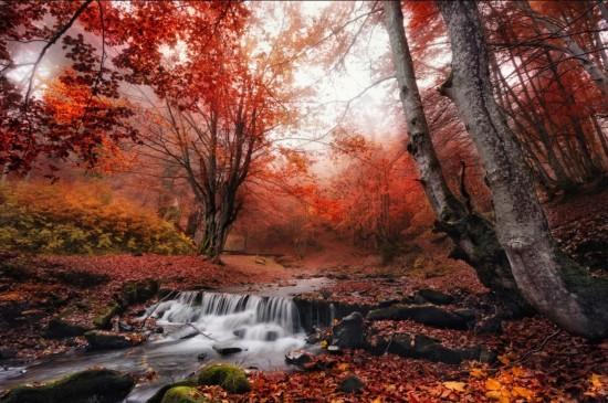 <唯美秋季红色枫叶图片