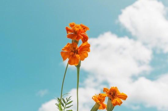 小清新天空花朵图片