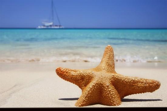 沙滩上的海星贝壳唯美创