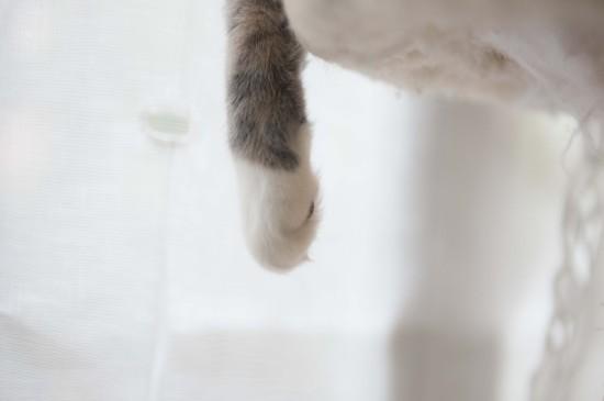 可爱的猫咪高清电脑桌面壁纸