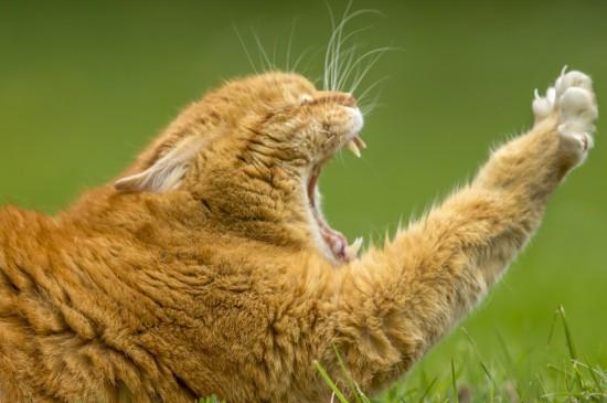 可爱橘猫图片高清桌面壁纸