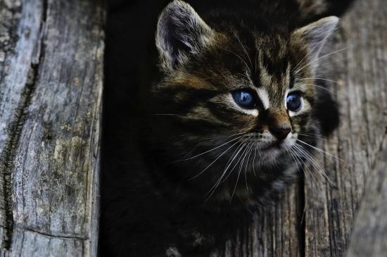 小奶猫高清可爱电脑桌面壁纸图片