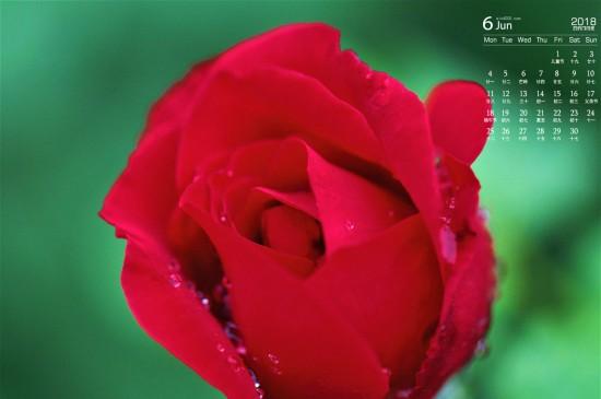 <2018年6月娇艳动人红色花卉图片日历壁纸