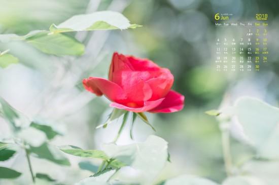 <2018年6月养眼绿色植物高清日历壁纸