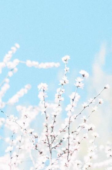 清新雅致花卉手机壁纸