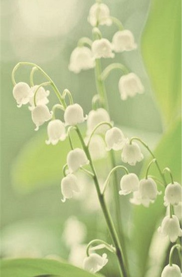 養眼的清新植物花卉手機