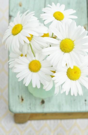 花朵系列小清新手机锁屏