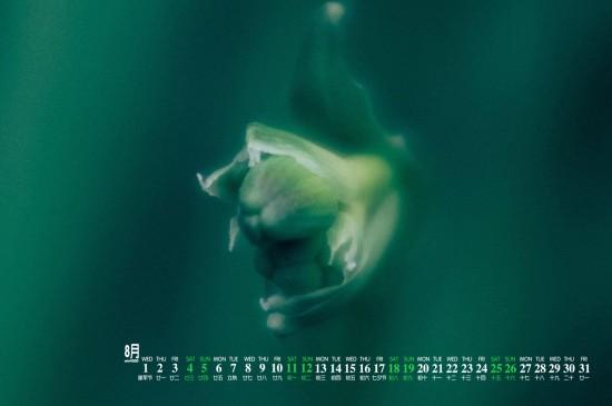 <2018年8月护眼朦胧植物高清日历壁纸
