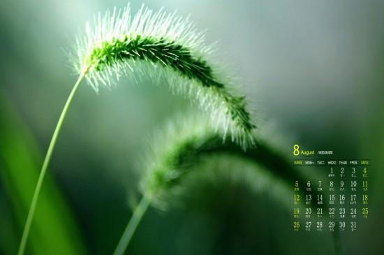 <2018年8月绿色护眼植物高清日历壁纸