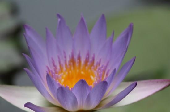 唯美紫色花朵图片高清电