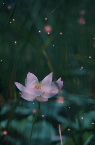 梦幻花卉摄影唯美高清手机壁纸