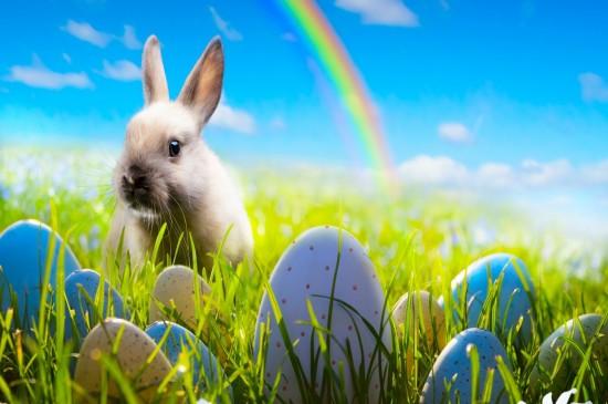 软萌可爱的小兔子图片桌面壁纸