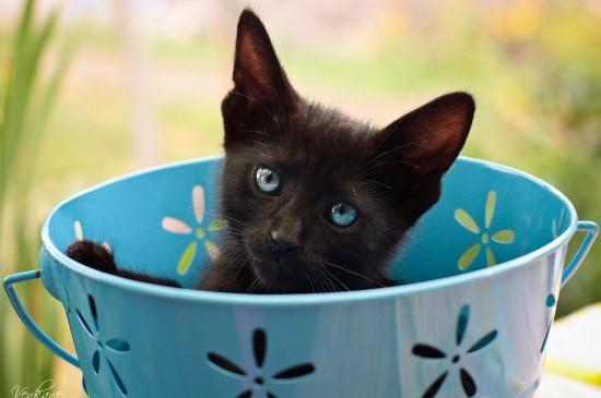 软萌可爱的小猫咪图片电脑壁纸