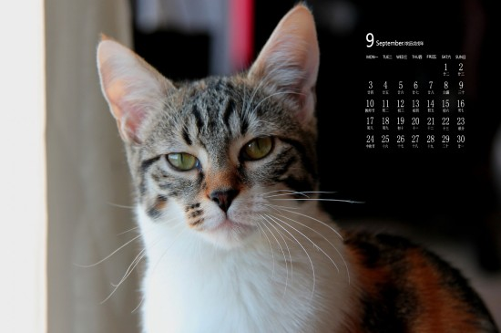 <2018年9月可愛貓咪日歷圖片壁紙
