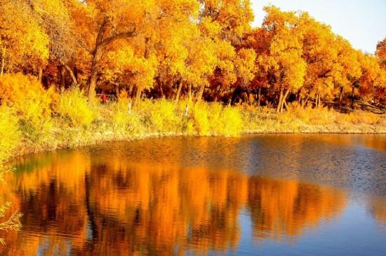 金黄的胡杨林唯美高清桌面壁纸