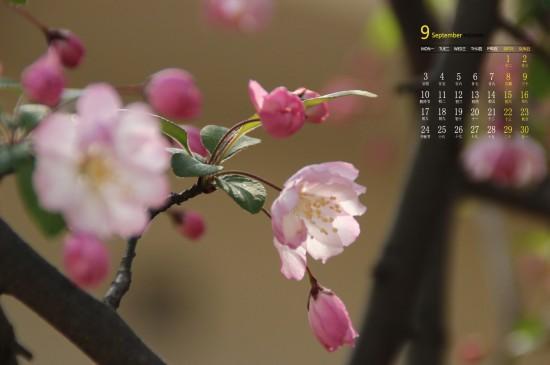 <2018年9月好看的海棠花高清日歷壁紙