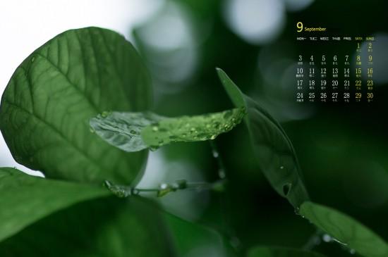 <2018年9月綠色護眼植物唯美高清日歷壁紙
