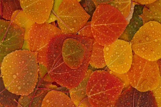 <色彩缤纷的叶子唯美高清桌面壁纸