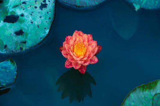 好看的莲花高清桌面壁纸图片壁纸