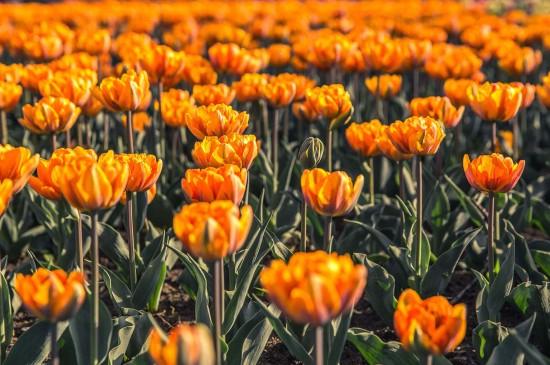 护眼高清花卉植物图片桌面壁纸