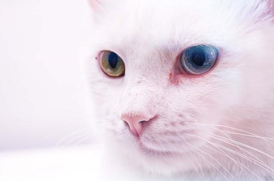 可愛貓咪電腦高清桌面壁