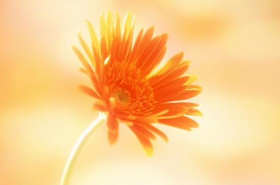 清新好看的花卉图片高清壁纸