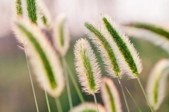 高清护眼绿色植物图片宽屏壁纸
