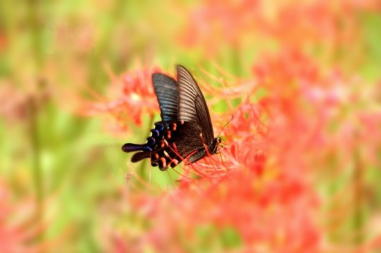 养眼花间蝴蝶唯美高清桌
