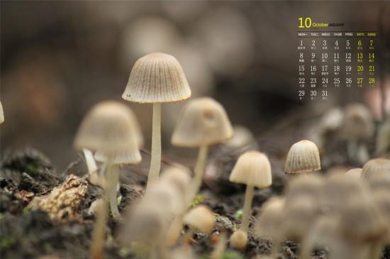 2018年10月可爱的野外蘑