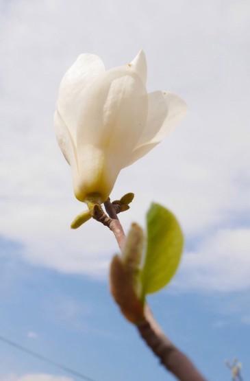 小清新花卉静物图片手机壁纸