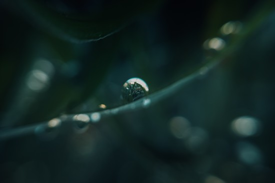 <植物上水珠微距摄影高清图片桌面壁纸