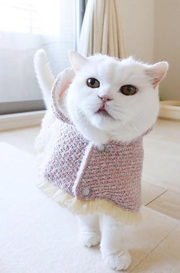 可爱猫咪高清手机壁纸图片