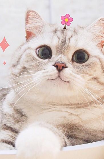 猫咪高清手机壁纸图片