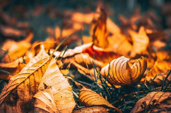 秋天十月养眼落叶森林高清桌面壁纸