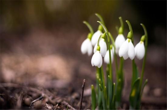 微距鲜花摄影高清桌面壁纸