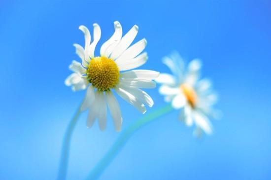 清新淡雅唯美花卉图片桌面壁纸