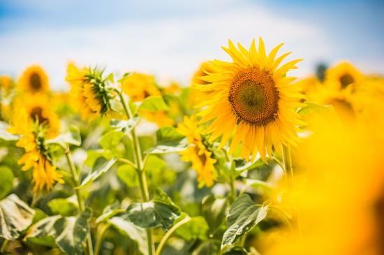 花卉唯美摄影电脑桌面壁纸图片
