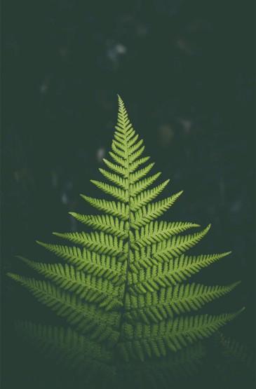 绿色蕨类植物护眼高清手机壁纸