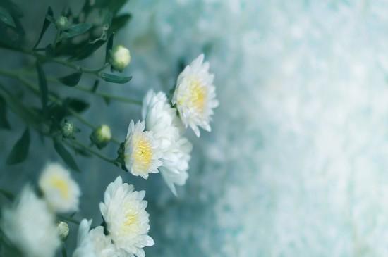 小清新植物唯美高清桌面壁纸