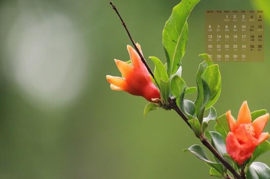 2019年5月护眼花卉植物日历图片壁纸