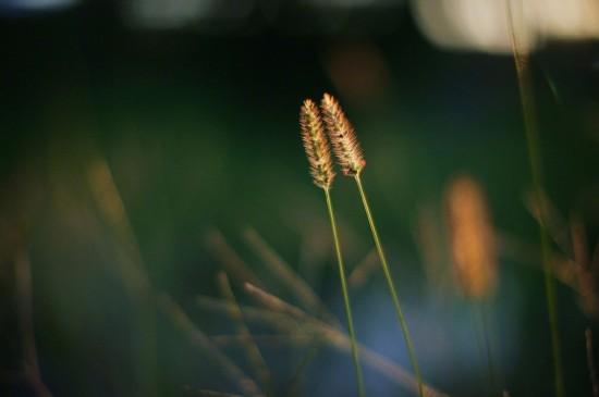 超清护眼绿色植物图片电脑壁纸