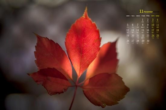 2018年11月秋日枫红唯美高清日历壁纸
