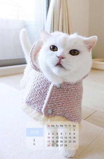 2019年2月萌宠喵星人日历图片手机壁纸